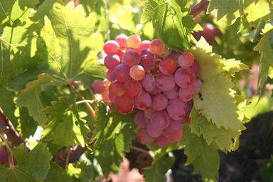 Aprobado el nuevo Reglamento de Cooperativas de Castilla-La Mancha