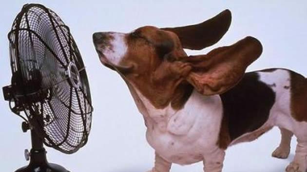Trucos para preparar la casa para las altas temperaturas del verano