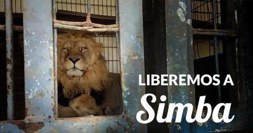 El Pacma exige al Gobierno el fin definitivo de los circos con animales en España