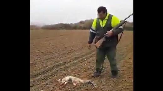 Pacma denuncia un brutal caso de crueldad de un cazador para acabar con la vida de un zorro